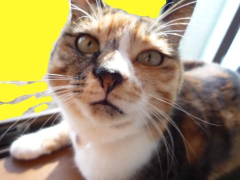 飼ってる猫の写真